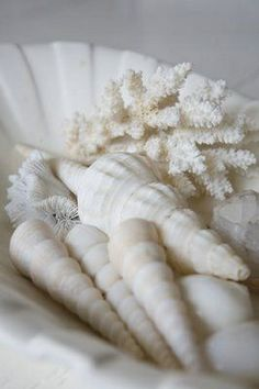 Shells of white