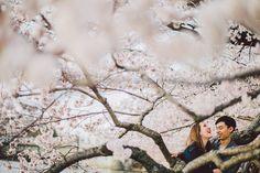 a laugh during a Washington DC cherry blossoms engagement session #dcphotographer #engagementsession