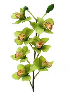 Orchid Cymbidium Large - Green