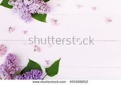 Beautiful white and violet lilac flowers on white wooden. Flat lay, top view with copyspace