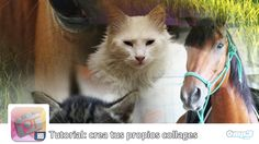 Crea fondos de pantalla personalizados con PhotoTangler Collage Maker - Con este tutorial, aprenderás cómo crear collages de fotos con PhotoTangler Collage Maker. ¡Adelante! http://blog.mp3.es/como-hacer-bellos-collages-con-phototangler-collage-maker/?utm_source=pinterest_medium=socialmedia_campaign=socialmedia