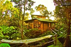 Take me to this TREEHOUSE in Volcano, Hawaii.