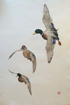 MALLARD DESCENDING Karl Martens #watercolorarts