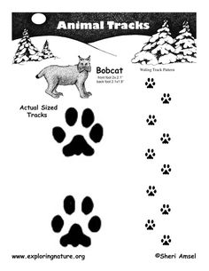 Animal Tracking Observation vs. Inference Activity