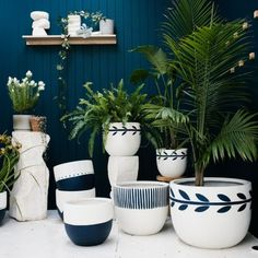 Patterned pots and teal walls