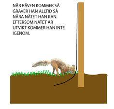 How to make your aviary preditary safe  räv säkert /Hur djupt ska nätet grävas ner?