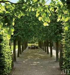 Linden trees shade a table for outdoor dining.  By Landscape Firm Wirtz International