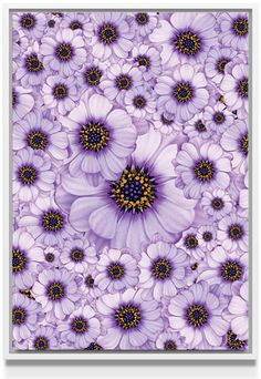 Daisy Stretched Canvases by Loredana | Nuvango