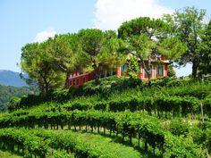 Das Gut Vigne Matte liegt im DOCG Anbaugebiet des #Prosecco Conegliano Valdobbiadene nahe dem malerischen Dorf Rolle, in dem noch heute die Zeit still zu stehen scheint, ein wahres Paradies. Der Weinkeller wurde direkt in den Hügel gebaut, was eine optimale Lagerung des Weines zulässt. Außerdem verfügt der Weinkeller über technische Einrichtungen, welche sich auf dem neuesten Stand befinden, um in der Wein- und Sektherstellung den hohen Anforderungen an ein Spitzenprodukt gerecht zu werden.