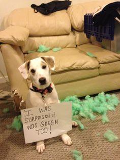 Puppy Shame