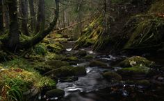 Ravens Rock Gorge, Rosehall, Sutherland, Scottish Highlands by Heather Leslie Ross, via 500px