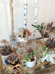 My succulent's corner