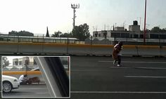 Heartwarming moment woman runs across four-lane MOTORWAY full of speeding traffic (twice!) to rescue stray dog hit by a car Free Planet, Save A Dog, Crazy Dog Lady, Save Animals, Be A Nice Human, Running Women, Cool Things To Make, The Fosters, Street View