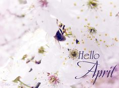 Hello April april hello april april quotes april is here april is coming