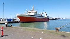 I formiddags ankom Mercey Phoenix til Hirtshals Havn efter en uges sejlads fra Canada. North Atlantic Shipping er mægler for Mercy Phoenix, som skal losse 800 tons frosne rejer. Dette er en af de største laster af denne art, som er losset fra en...