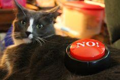 Dude Says NO! » Dusty Duder » photo by Diana Dalasio
