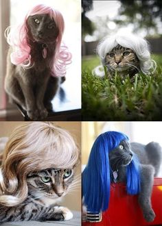 i would really like to have a wig-wearing kitten one day.