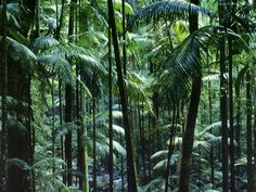 Las, Tropikalny - Australia