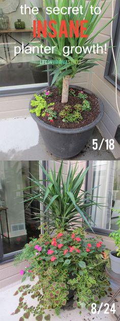The secret to insane planter growth - I plan to give this a try ASAP based on these results!
