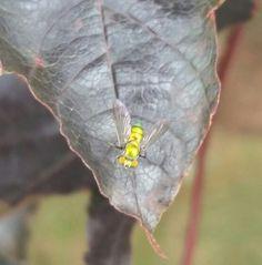 Buzz buzz little bug