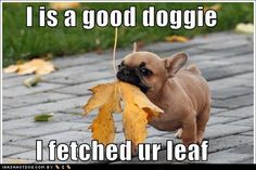 Wonder if I could teach my dog to do this rather than just bark at moving leaves.  Lol