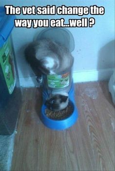 Funny Animal Pictures - View our collection of cute and funny pet videos and pics. New funny animal pictures and videos submitted daily. Cute Funny Animals, Funny Animal Pictures, Funny Cute, Cute Cats, Cute Pictures, Funny Kitties, Random Pictures, Adorable Kittens, Crazy Funny
