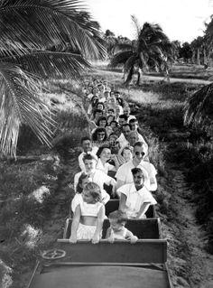 Key Biscayne: Island retreat transformed by bridge Old Florida, Vintage Florida, Miami Florida, Miami Beach, Cape Florida Lighthouse, Crandon Park, Miami Photos, Best Memories, Childhood Memories