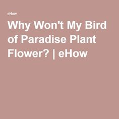 Why Won't My Bird of Paradise Plant Flower? | eHow