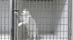 Prison Break Cat Edition
