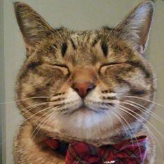 「今日は髭祭だって❗うめぴんも参加~あたしの髭、どう?  #髭祭 #ねこ #猫写真 #ネコ #猫 #しましま軍団 #ニャンコ強化月間 #キジトラ #キジネコ #cat #catstagram #instacat #kitty #neko #tabby #고양이」