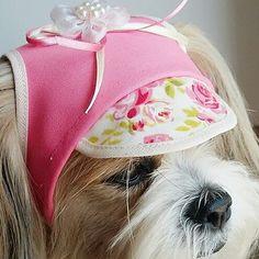 Boné Chapéu Para Cachorrinha - Acessório Pet Poodle, Pets Movie, Little Live Pets, Cute Dog Pictures, Buy Pets, Outdoor Dog, Dog Coats, Pet Clothes, Dog Accessories