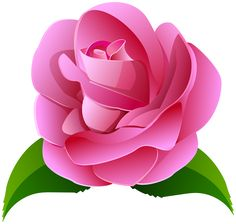 Pink Rose Deco Transparent Clip Art Image Wallpaper Nature Flowers, Rose Flower Wallpaper, Beautiful Flowers Wallpapers, Rose Flower Png, Flower Art, Bow Template, Beautiful Red Roses, Pink Plant, Flower Clipart