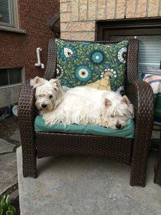 Menina and Tavis sharing a chair