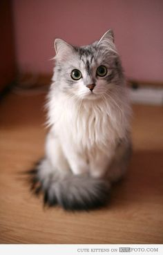 looks like my Cat as a kitten:D