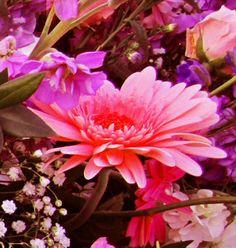 Pink/Purple Flowers