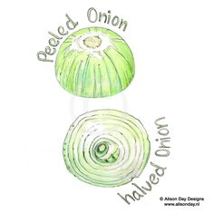 Food illustration - Onions by Alison Day