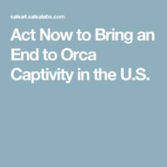 Act Now to Bring an End to Orca Captivity in the U.S.