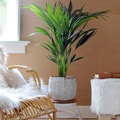 Bekijk alle kamerplanten