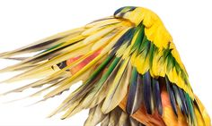 Gallery - Top shots from the bird catwalk - Image 2 - New Scientist