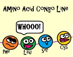 Everyone loves the amino acid conga line! This is an image from our protein synthesis video! We go over the steps of transcription and translation and the roles that ribosomes, DNA, and RNA play. We also compare and contrast RNA and DNA and explain the three different types of RNA.  Come learn and laugh with the zany Amoeba Sisters!