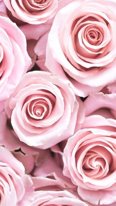 Good Images Pink Flowers fondos Style Your purple rose is a nice universal image of love in addition to passion. Wallpaper Marvel, Wallpaper Rose, Tumblr Wallpaper, Nature Wallpaper, Iphone Wallpaper, Black Wallpaper, Tumblr Roses, Pink Roses, Pink Flowers