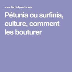 Pétunia ou surfinia, culture, comment les bouturer