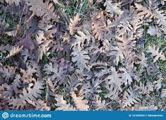 Photo about some fallen tree leaves found season grass background texture autumn leaf green nature natural eco ecosystem trees. Image of leaves, texture, forest - 141695005