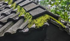 Haiku, Moss Removal, Asphalt Roof, Roof Cleaning, Roof Tiles, Dry Leaf, Roofing Contractors, Roof Repair, Image House