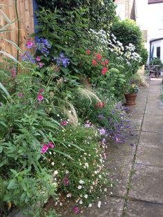 Late July in my garden.
