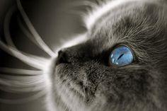 the eyes<3