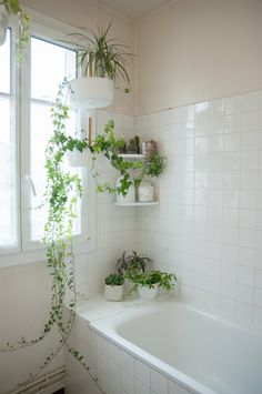apartment bathroom Bathroom Design Ideas for your Home from boldly tiled floors to chandeliers, these beautiful bathrooms offer enough design inspo to jumpstart a years worth of DIYs and remodels Simple Decor, Design Inspo, Plant Decor, Bathroom Plants, Bathrooms Remodel, Bathroom Decor, Indoor Plants, Beautiful Bathrooms, Bathroom Inspiration