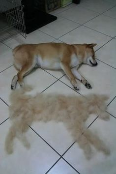 My Dog Sheds Too Much What Can I Do