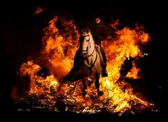 A man rides a horse through a bonfire in San Bartolome de Pinares, Spain, Monday, Jan. 16, 2012, in honor of Saint Anthony, the patron saint of animals. On the eve of Saint Anthony's Day, hundreds ride their horses trough the narrow cobblestone streets of the small village of San Bartolome during the 'Luminarias' a tradition that dates back 500 years and is meant to purify the animals with the smoke of the bonfires and protect them for the year to come. (Daniel Ochoa de Olza, AP)