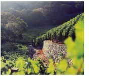 Moraga Winery, Nancy Goslee Power & Associates
